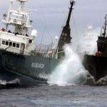 Anti-whalers clash with Japan's whaling fleet