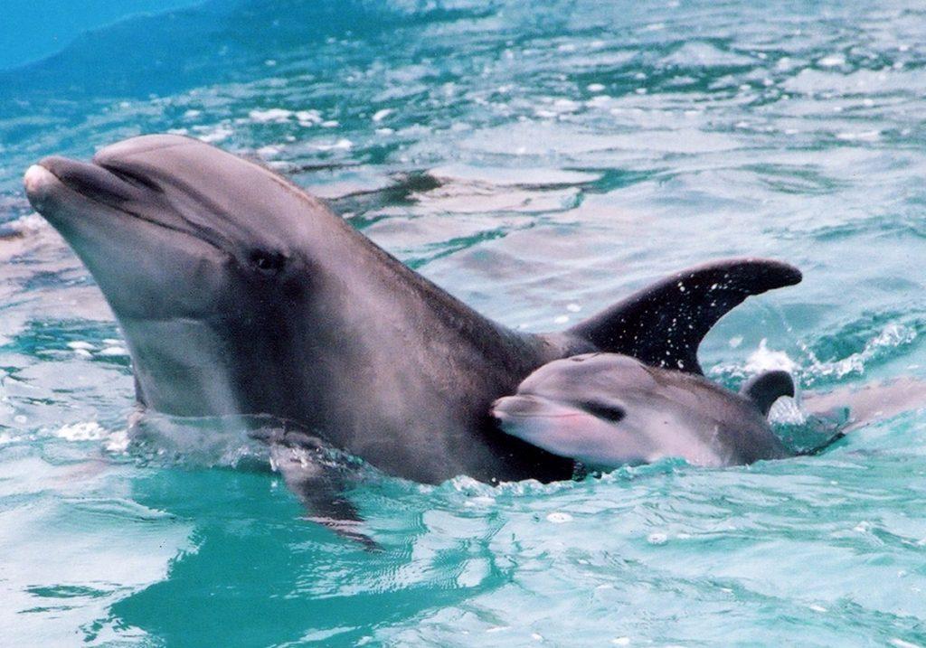 Dolphins at Kamogawa Sea World